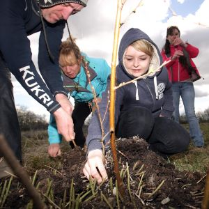 Group planting in Belfast - cropped
