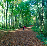 Lucy - Garvagh Forest